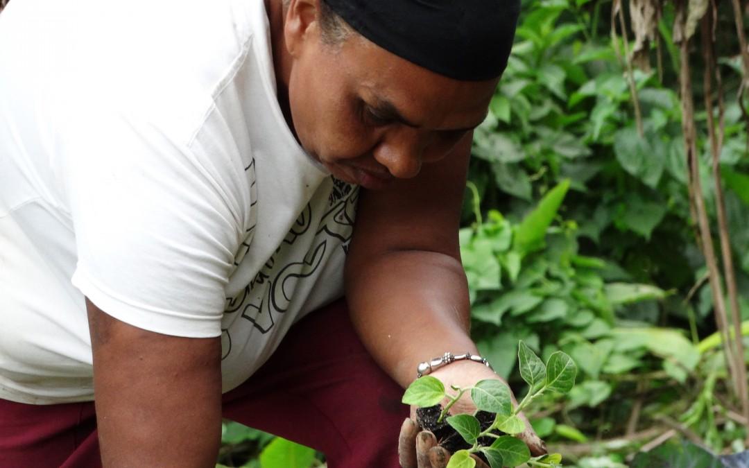 Domingo (19) será dia de agroecologia, feminismo e feira de orgânicos em São Paulo