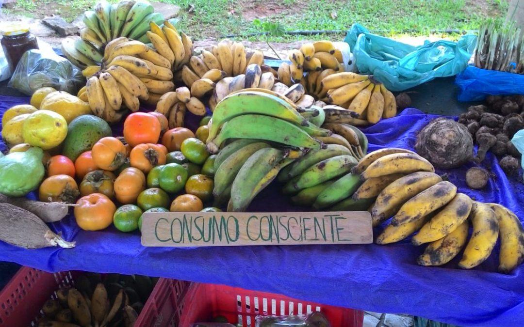 Estudo sistematiza como iniciativas de consumo responsável em São Paulo fortalecem soberania alimentar no campo e na cidade